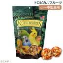 賞味期限:2021/10/6 ラフィーバー トロピカルフルーツ オカメインコ (10oz/284g)