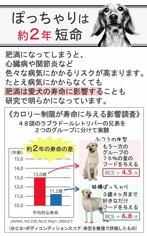 【ロイヤルカナン 高齢犬用】SHN ミニ ライト 成犬・高齢犬用 (小型犬)8kg【関東当日便】