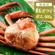 【ふるさと納税】【おすすめ】新湊産紅ズワイガニ約600g【木