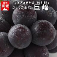【ふるさと納税】☆先行予約【人気のブドウ】巨峰 約1.8kg