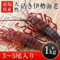 【ふるさと納税】高知県産天然活き伊勢海老(中サイズ)約1kg