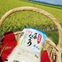 【ふるさと納税】さがびより 無洗米 10kg(5kg×2袋)