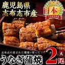 【ふるさと納税】鰻生産量日本一の鹿児島県産!うなぎの大楠<大