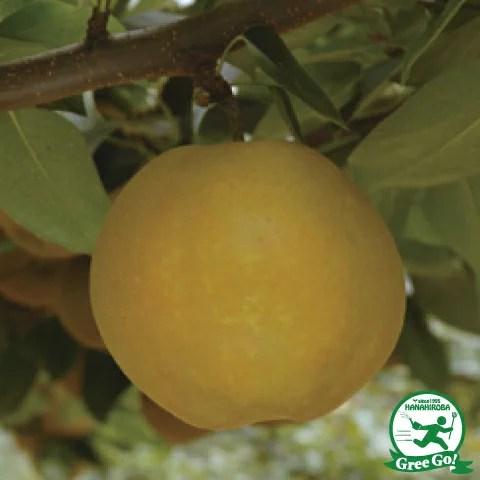 梨のジョイント苗の苗木専門店一覧【まとめ】 149