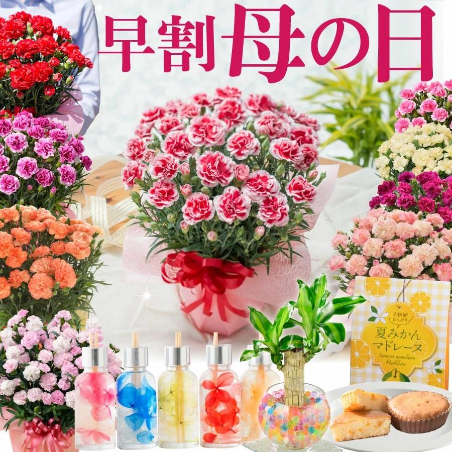 【早割 まもなく終了】 母の日 プレゼント カーネーション 鉢植え ギフト 選べる10種の花色 赤