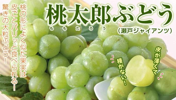 <家庭用>「桃太郎ぶどう」(瀬戸ジャイアンツ)約1.5kg前後