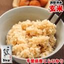 令和元年産 千葉県産 こしひかり 玄米 5kg 玄米食でも安心!再調整済み お米 ギフト