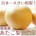 あたご梨 鳥取県産 最高級(赤秀)愛宕梨6玉 特大 5kg 有機栽培 送料無料