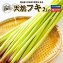 ふき 送料無料 2kg 生 北海道 ニセコ産 天然 春の山菜 クール便 冷蔵 フキ 蕗