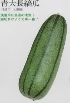 【楽天市場】【シロウリ】青大長縞瓜〔固定種〕/小袋:野菜の ...