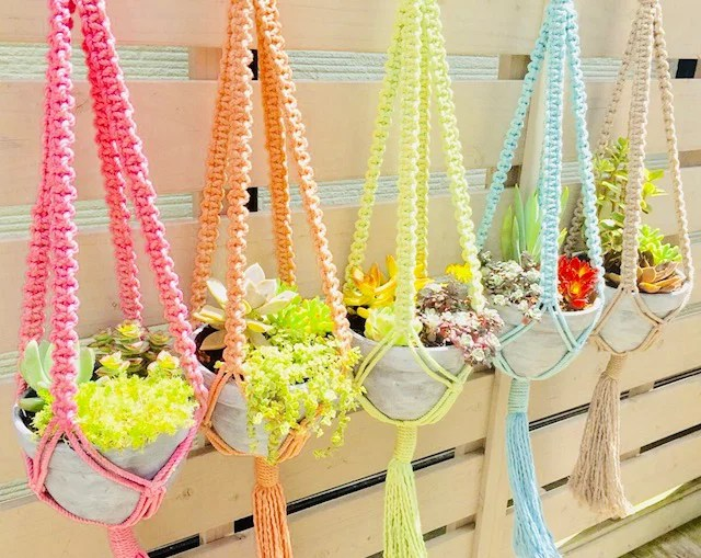多肉植物、サボテン、セダム類の管理が少ない寄せ植えセットオシャレで可愛い手編みハンギングバスケット(...