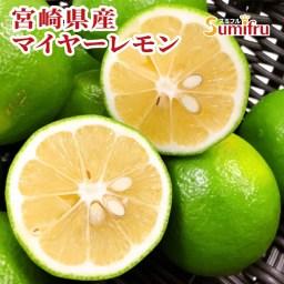 宮崎県産 レモン 5kg マイヤーレモン メイヤーレモン 国