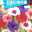 花種 NL150 矢車草 八重咲混合 小袋 [FYG110]【花の種】【タキイのタネ】【ガーデニング】
