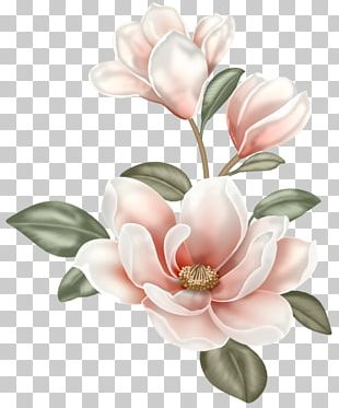 Magnolia Flower Png : magnolia, flower, Magnolia, Flower, Images,, Clipart, Download