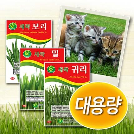 청농 대용량 캣그라스 [밀 보리 귀리] 새싹씨앗, 1개, 새싹보리 500g