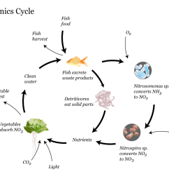 aquaponics cycle infographic [ 1500 x 1122 Pixel ]