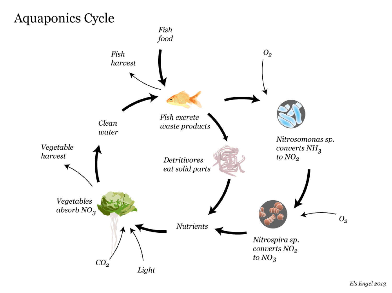hight resolution of aquaponics cycle infographic