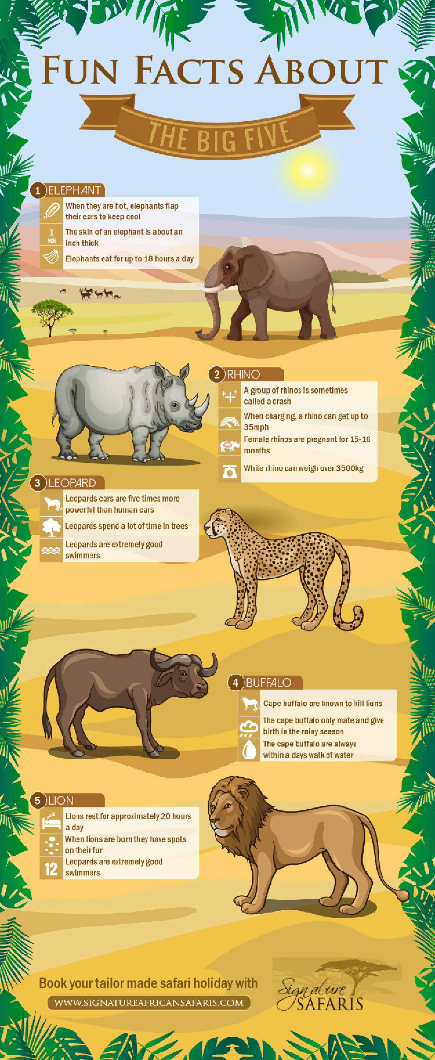 Facts About The Big Five In Africa