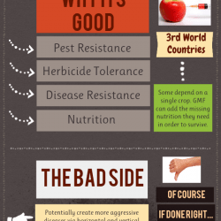 Genetically Modified Foods Good Or Bad Visually
