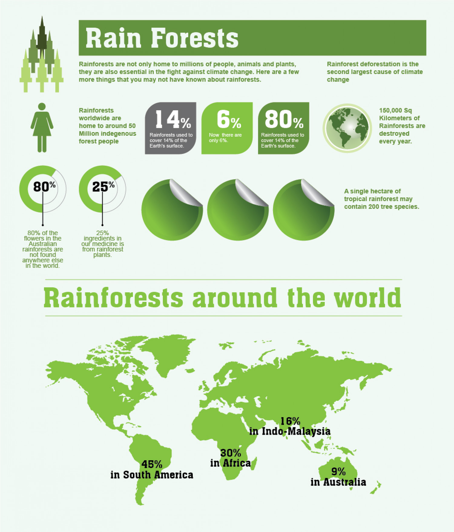 Rainforests Facts And Figures