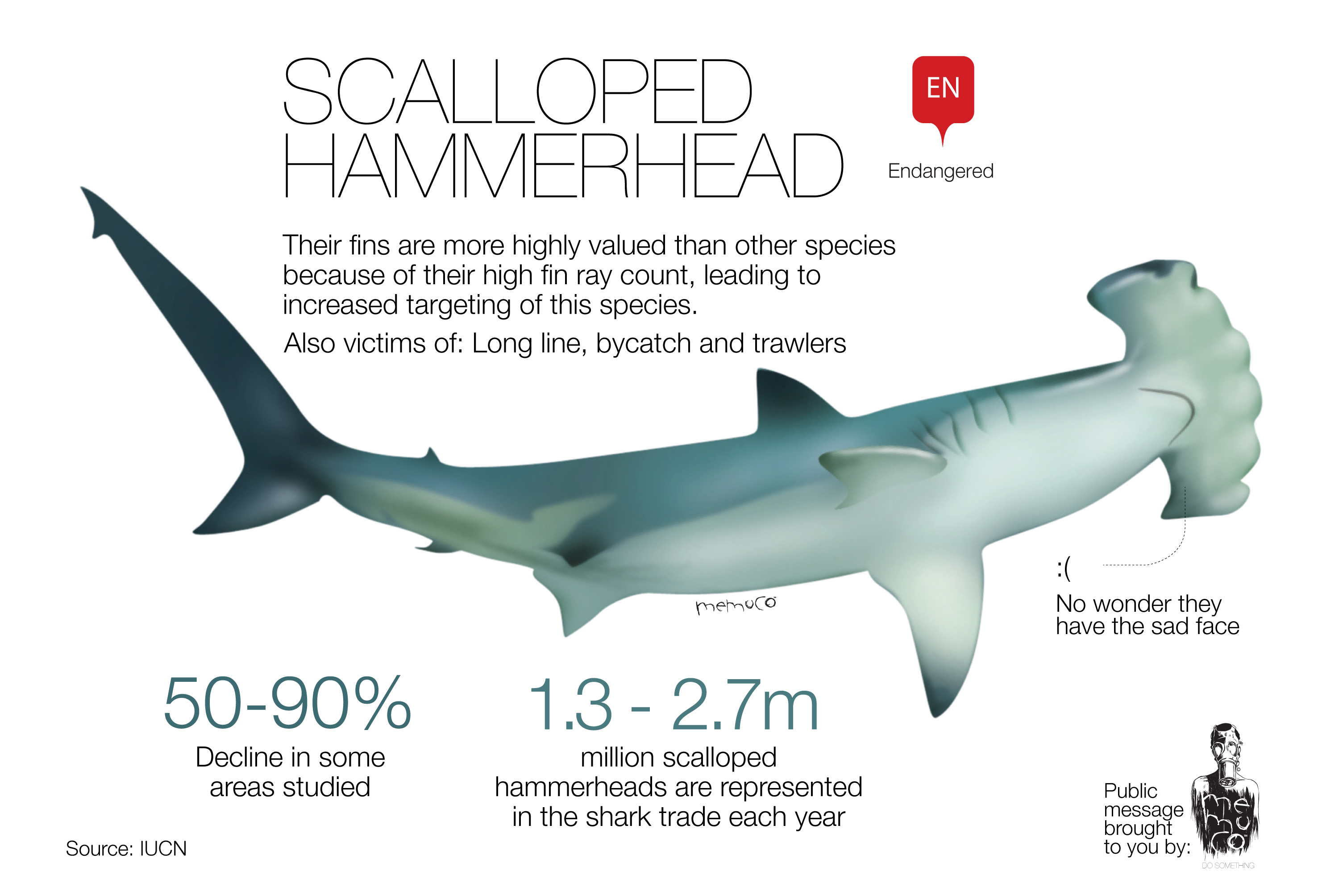 great white shark anatomy diagram power cord wiring scalloped hammerhead food chain