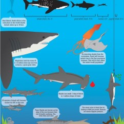Alligator Food Chain Diagram Nissan 350z Bose Radio Wiring List Of Synonyms And Antonyms The Word Shark Ecosystem