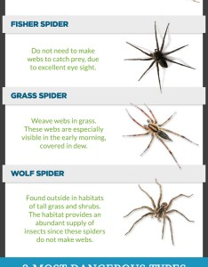 also spiders in iowa infographic visual rh
