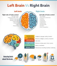 The Left Brain Vs Right Brain Confusion | Visual.ly