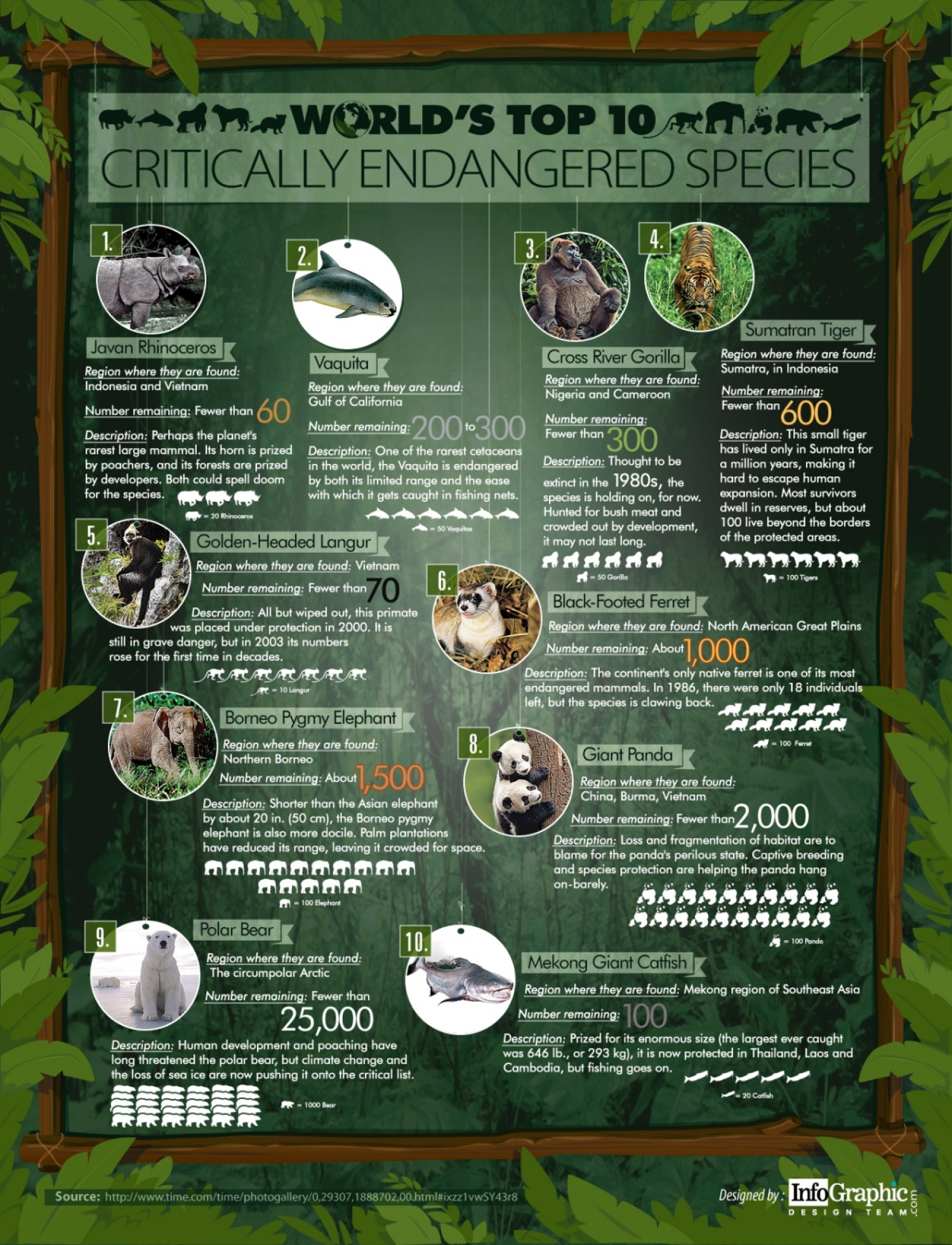 World S Top 10 Critically Endangered Species
