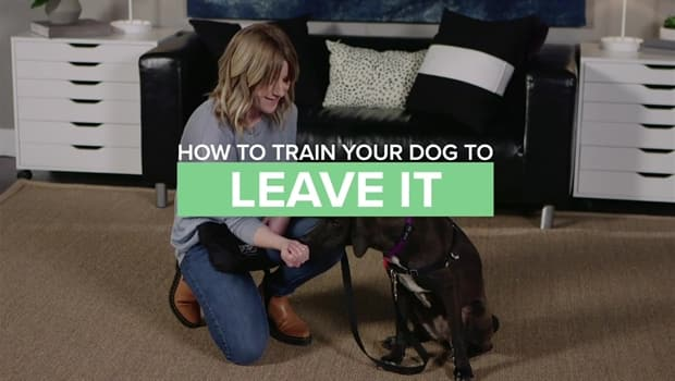 Dog Training – Perfect and the Simplest Way to Teach Your Pup!