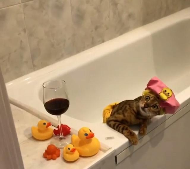 cat relaxes in bath
