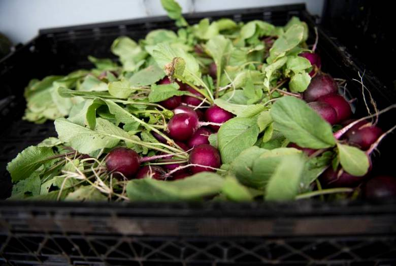 Beets from a garden at the We Over Me farm at Paul Quinn College, an iniative started by the Michael Sorrell on Nov. 11, 2019.
