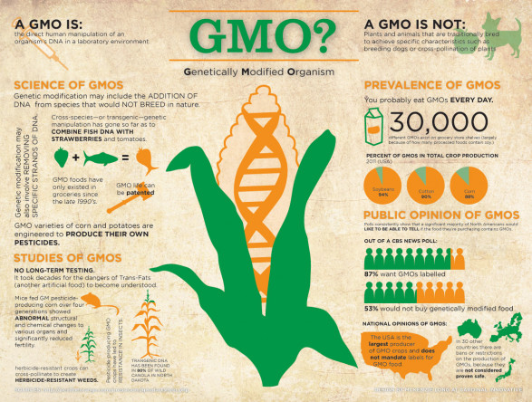 GMO? Genetically Modified Organism