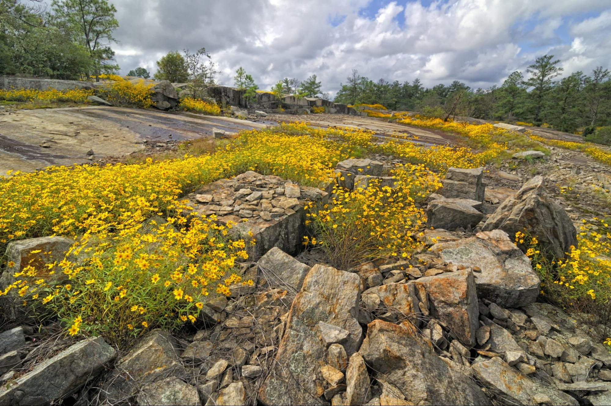 """More recently, the landscape was mined for its unique rock composition, called lithonia granite, or """"tidal grey"""", up until the 1970s. Dekalb S Arabia Mountain Entices With Granite Fall Daisies"""