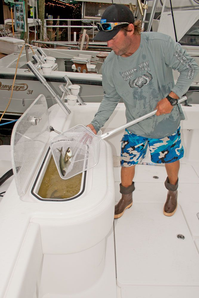 Boat Livewell Plumbing Diagram : livewell, plumbing, diagram, Livewell, Pumps, Sport, Fishing, Magazine