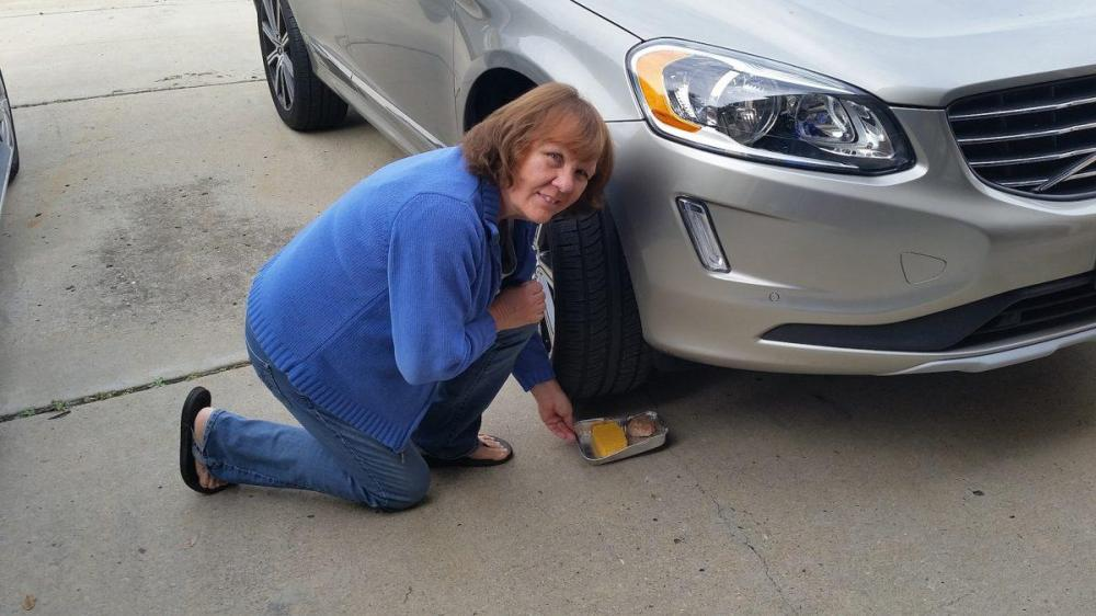 medium resolution of new cars soy coated wires give rodents plenty to chew on