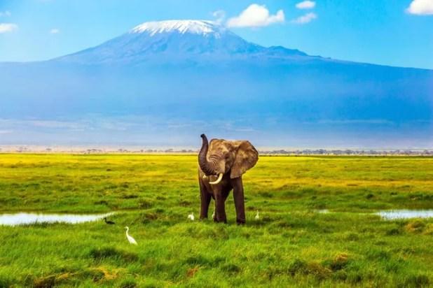 Image result for kilimanjaro tanzania
