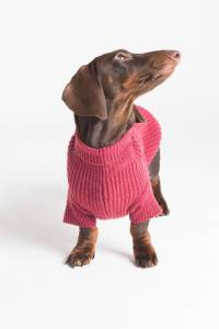 Dog Clothes, Dog Coats & Dog Fashion at BaxterBoo