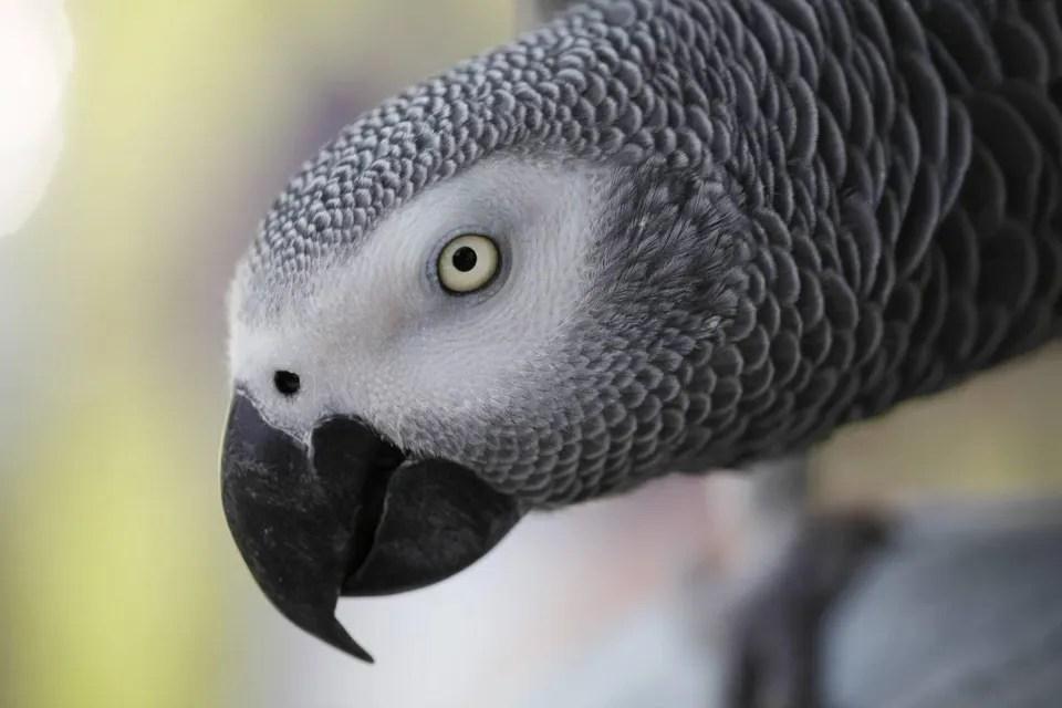 what makes parrots so