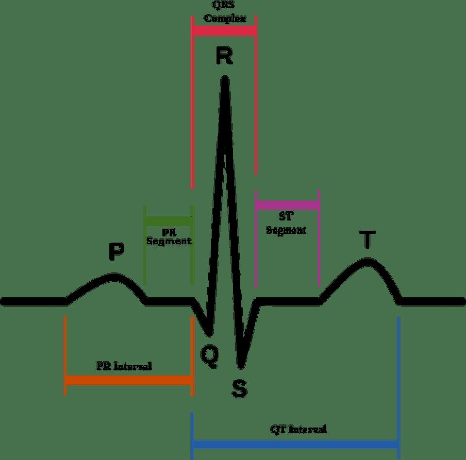 hight resolution of normal human cardiac rhythm on ekg