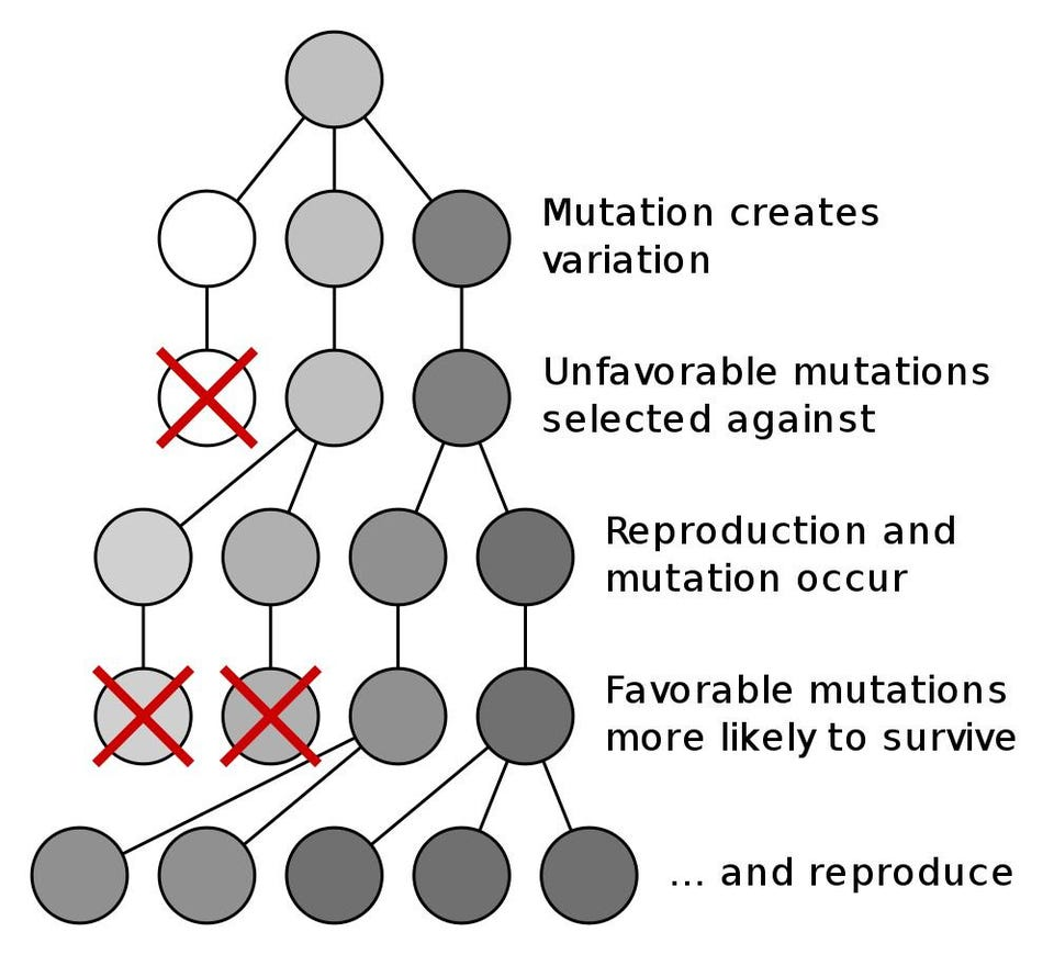 hight resolution of the darwinian mechanism for evolution is reliant on mutation and natural selection and can result