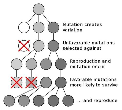 small resolution of the darwinian mechanism for evolution is reliant on mutation and natural selection and can result