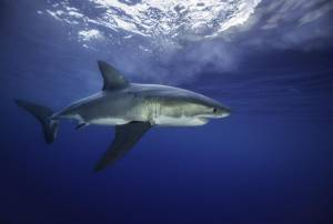 Technology could save us from shark bites