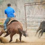 Z Boots Take The Heat For Rodeo Horses Says Entrepreneur Inventor