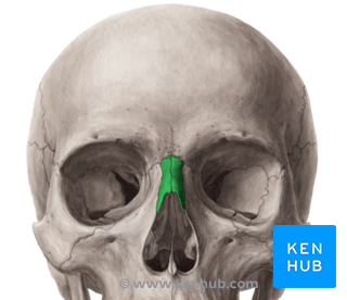 face bone diagram telephone extension socket wiring the nasal - anatomy, borders, development, pathology | kenhub