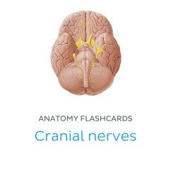 cranial nerves ebook cover [ 800 x 1200 Pixel ]