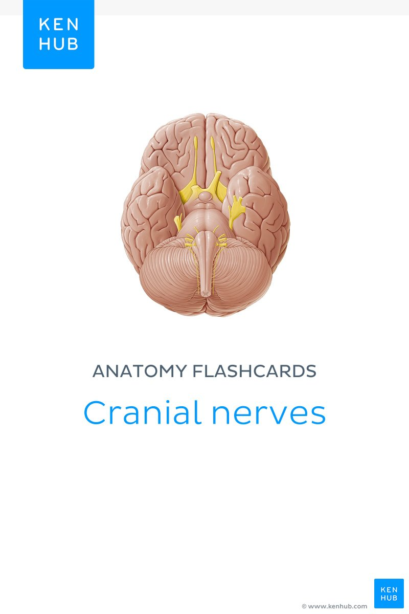 hight resolution of cranial nerves ebook cover