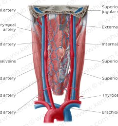 atlas blood vessels of the pharynx [ 1400 x 896 Pixel ]