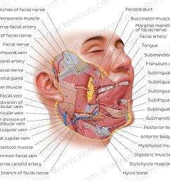 pictorial essay salivary gland imaging [ 1400 x 896 Pixel ]