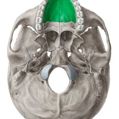 Unlabeled Skull Diagram Inferior View Dpdt Relay Wiring Of The Base Anatomy Kenhub
